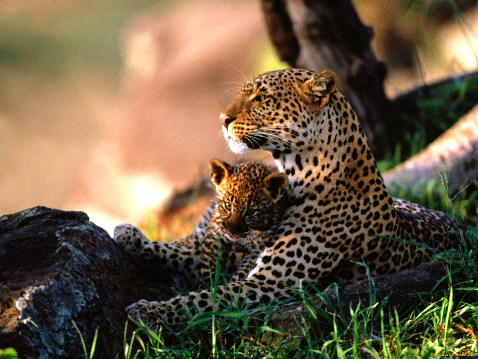 Фото с высоким разрешением для фотопечати животные